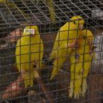 Beindult a szentesi madárbörzék sorozata