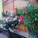 Ismét elismerik a legügyesebb 'virágkertészeket'