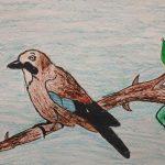 Pályázat általános iskolásoknak: Magyarország madarai